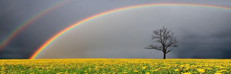 Arcobaleno e fiori